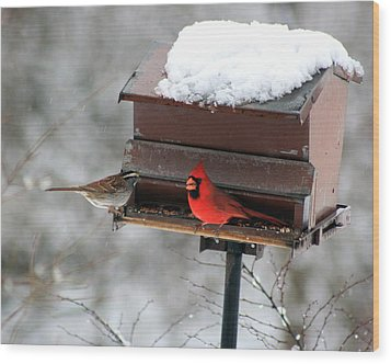 Cardinal And Sparrow At Feeder Wood Print