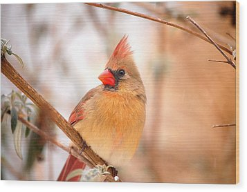 Wood Print featuring the photograph Cardinal Bird Female by Peggy Franz