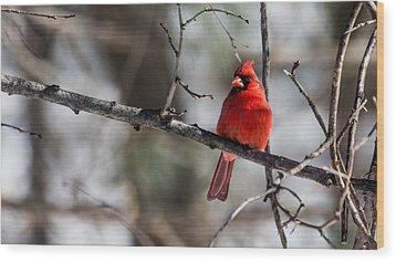 Cardinal Wood Print by Dan Traun