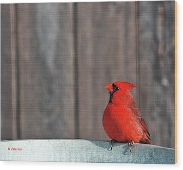 Cardinal Drinking Wood Print by Edward Peterson