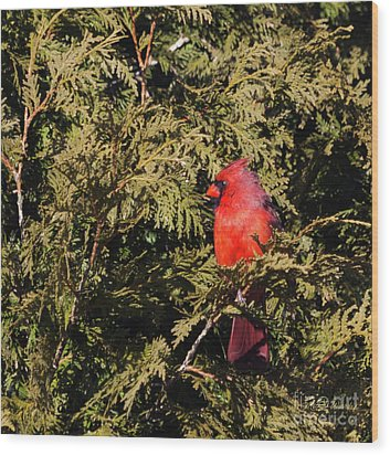 Wood Print featuring the photograph Cardinal I by Michelle Wiarda