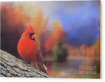 Cardinal In Autumn Wood Print