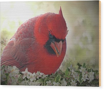 Wood Print featuring the photograph Cardinal In Flowers by Debbie Portwood