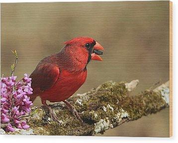 Cardinal In Spring Wood Print
