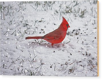 Cardinal In The Snow Wood Print by Suzanne Stout