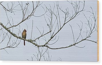 Wood Print featuring the photograph Cardinal In Tree by Richard Rizzo