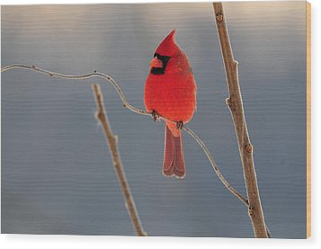 Wood Print featuring the photograph Cardinal by Mike Martin