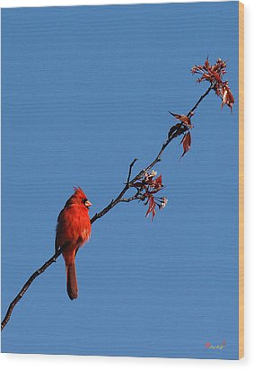Wood Print featuring the photograph Cardinal On A Cherry Branch Dsb033 by Gerry Gantt
