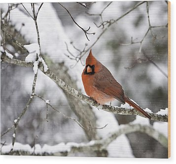 Cardinal On Snowy Branch Wood Print by Rob Travis
