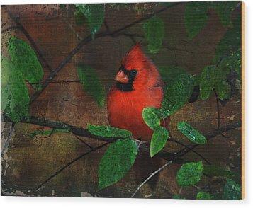Cardinal Wood Print by Perry Van Munster