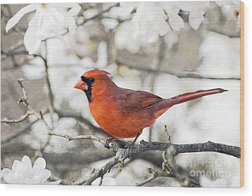 Wood Print featuring the photograph Cardinal Spring - D009909-a by Daniel Dempster