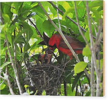 Cardinals Chowtime Wood Print by Al Powell Photography USA