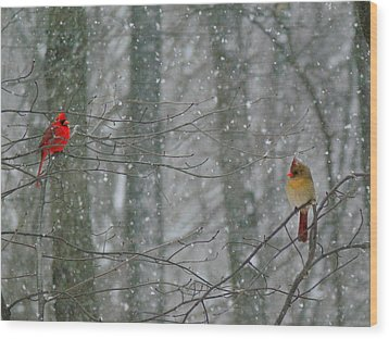 Cardinals In Snow Wood Print by Serina Wells