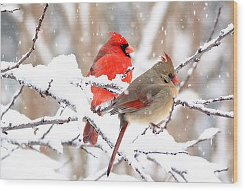 Cardinals In The Winter Wood Print