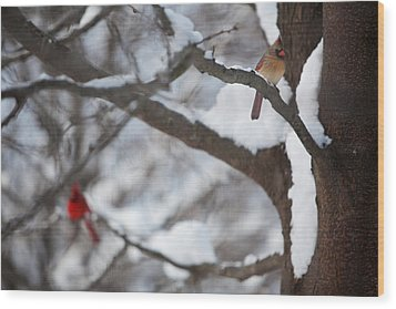Cardinals Wood Print by Jane Melgaard