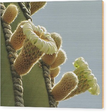 Wood Print featuring the photograph Cardon Cactus Flowers by Marilyn Smith