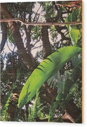 Wood Print featuring the photograph Caribbean Banana Leaf by Ian  MacDonald