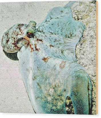 Wood Print featuring the photograph Caribbean Reef Octopus - Eyes Of The Deep by Amy McDaniel