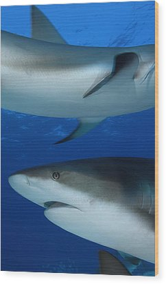 Caribbean Reef Sharks Swim Wood Print by Brian J. Skerry