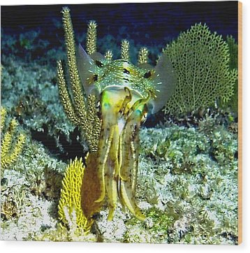 Caribbean Squid At Night - Alien Of The Deep Wood Print by Amy McDaniel