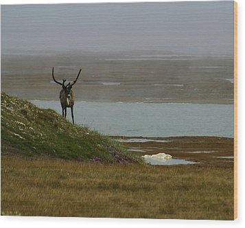 Caribou Fog Wood Print by Anthony Jones