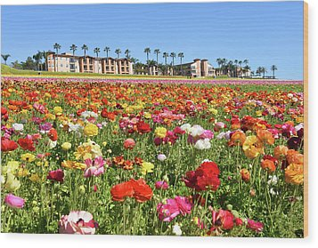 Wood Print featuring the photograph Carlsbad Flower Field by Dung Ma