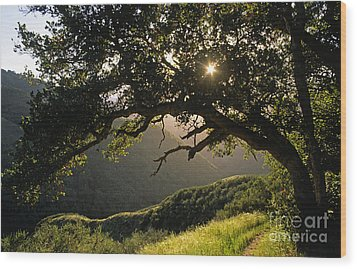 Carmel-valley-32-20 Wood Print by Craig Lovell