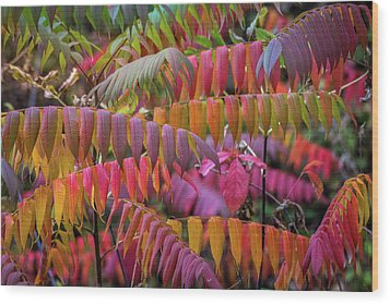 Wood Print featuring the photograph Carnival Of Autumn Color by Bill Pevlor