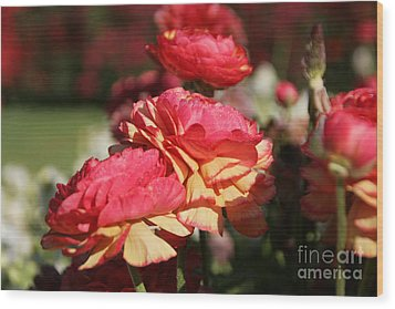 Carnival Of Flowers 03 Wood Print by Andrea Jean