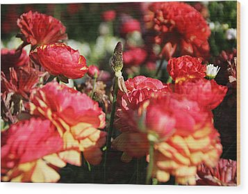 Carnival Of Flowers 04 Wood Print by Andrea Jean