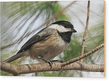 Wood Print featuring the photograph Carolina Chickadee by Charline Xia