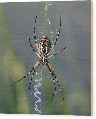 Carolina Garden Spider Wood Print