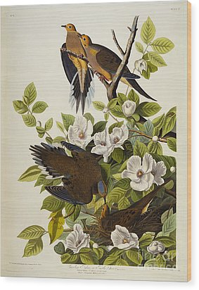 Carolina Turtledove Wood Print by John James Audubon