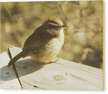 Carolina Wren Wood Print