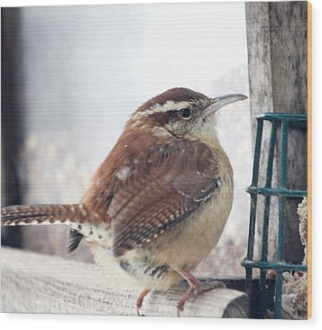 Carolina Wren Wood Print by Diane Merkle