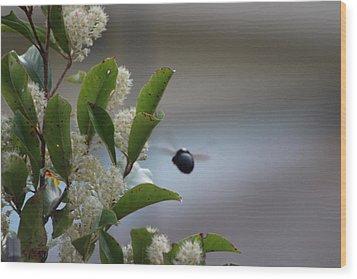 Carpenter Bee In Flight Wood Print by Colleen Cornelius