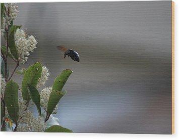 Carpenter Bee Landing Wood Print by Colleen Cornelius