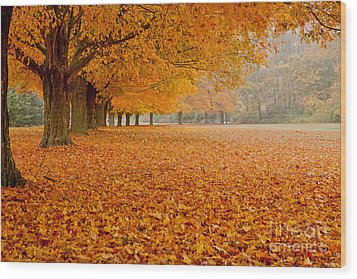 March Of The Maples Wood Print