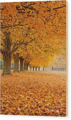 Carpet Of Gold II Wood Print