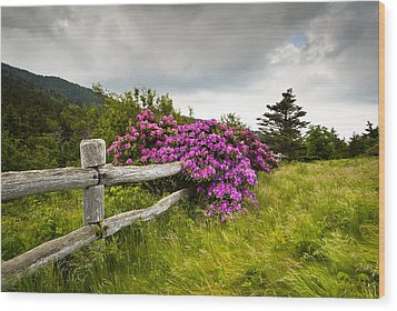 Carvers Gap Roan Mountain State Park Highlands Tn Nc Wood Print by Dave Allen