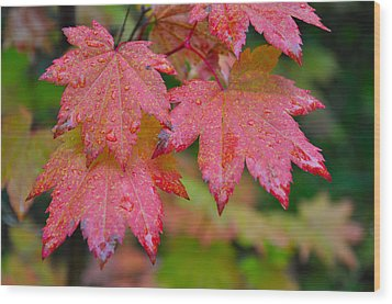 Cascade Autumn Leafs 5 Wood Print by Noah Cole