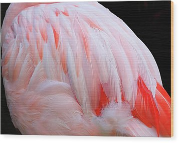 Wood Print featuring the photograph Cascading Feathers by Elvira Butler