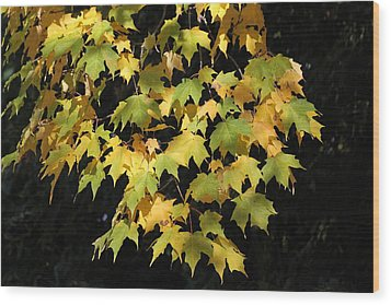 Wood Print featuring the photograph Cascading Leaves by Doris Potter