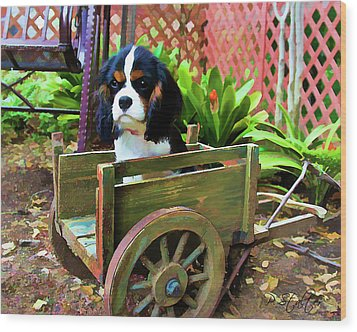 Casey In The Cart Wood Print by Patricia Stalter