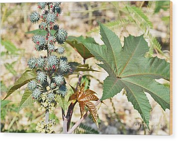 Wood Print featuring the photograph Castor Oil Plant by Ray Shrewsberry