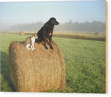 Cat And Dog On Hay Bale Wood Print
