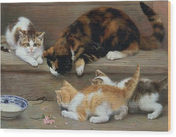 Cat And Kittens Chasing A Mouse   Wood Print