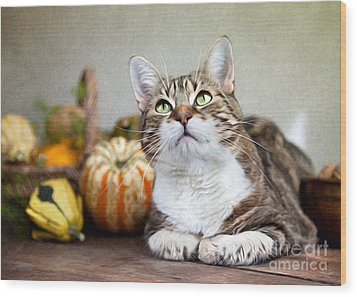 Cat And Pumpkins Wood Print by Nailia Schwarz