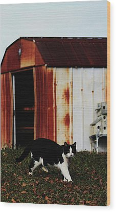 Cat And The Tool Shed Wood Print by Kim Henderson