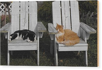 Cat Days Of Summer Wood Print by David and Lynn Keller